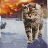 【最新版】かわいい・おもしろい・この夏、おすすめ「猫Tシャツ」2016